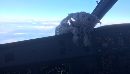 An Airline Captain's quest to reunite lost bear with its young owner. #GetShackletonHome