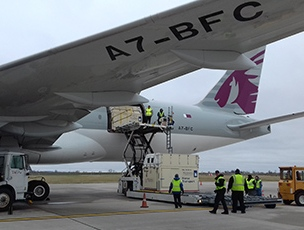 Leveraging its world-class product QR Live, Qatar Airways Cargo transported over 2,300 horses in the past 12 months.